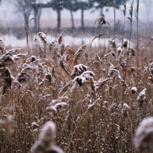 Первый снег. Фото: pixabay.com.